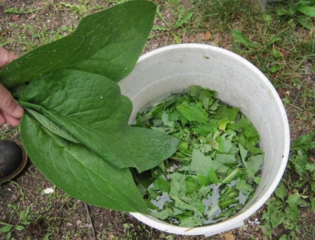 Brew Fertilizer Tea