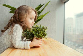 Shutterstock 604196255
